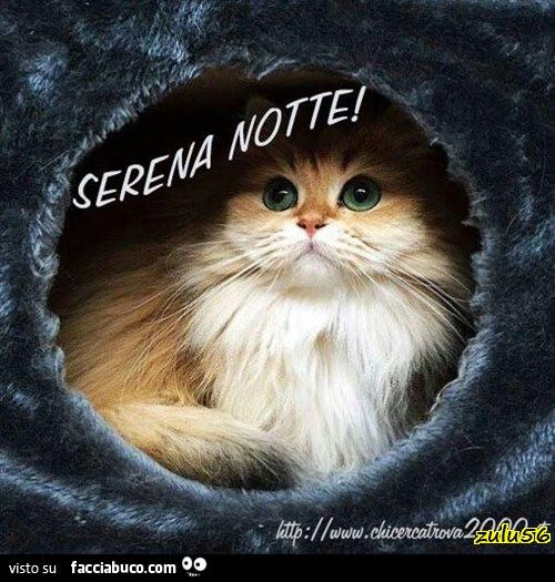 Serena Notte Dal Gatto A Pelo Lungo Facciabuco Com